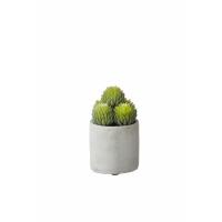 POMPON - succulent in pot - cement / polyester - DIA 11 x H 14 cm