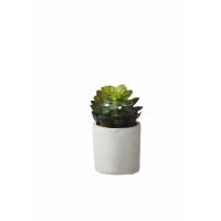 SUCCULENT - succulent en pot - ciment / polyester - DIA 11 x H 14 cm