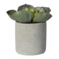 ALOE - succulent in pot - cement / polyester - DIA 11 x H 14 cm