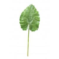 GIANT TARO - grande feuille - vert - H 160 cm