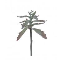SUCCULENT - succulent -  - H 38 cm - green