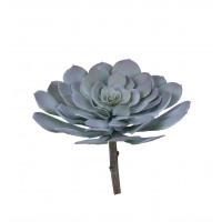SUCCULENT - succulent -  - H 23 cm - groen