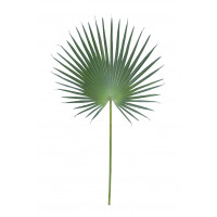 FANPALM - fanpalm leave -  - H 121 cm - green