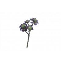 SUCCULENT - succulent -  - H 41 cm - vert