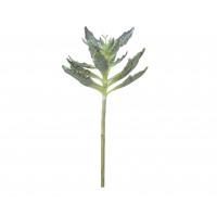 KALANCHOE - kalanchoe succulent -  - H 52 cm - vert