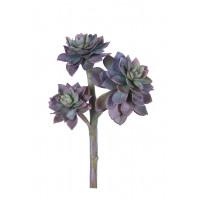 SUCCULENT - succulent -  - H 20 cm - purple
