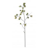 TREE EGGPLANT - aubergine boom - H 90 cm