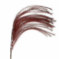 PLUM'O - plume artificielle - synthétique / fer - H 106 cm - bordeaux
