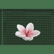 Kaars 1u 4,5cm 8,5cm Diameter Bloemen Wit/Roze