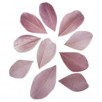 Pluimpjes Oud Roze 6cm