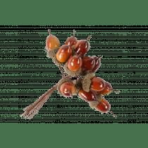 Picquet Fruits De Chêne 10cm 1,2cm Diamètre 12 Pièces
