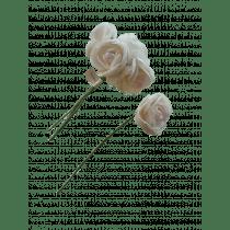 Roosjes 6cm Wit/Roze Foam 5 Stuks