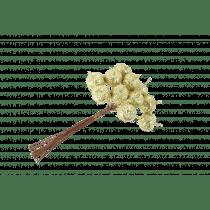 Bijsteker Bessen Goud 10cm 1,2cm Diameter 12 Stuks