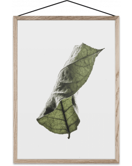 FLOATING LEAVES 04 A4