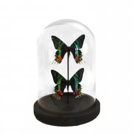 Vlinder in Stolp 2 Multicolor