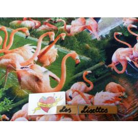 Digitaal Flamingo
