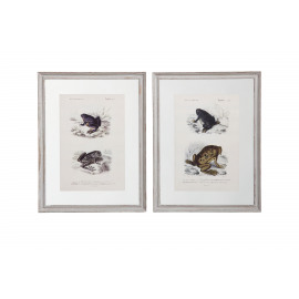 FROGS - set2 repro frames -- rusty black - 30x40cm