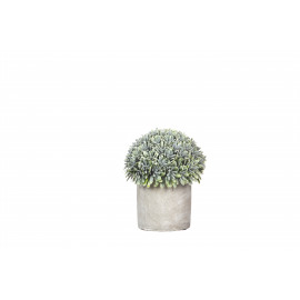 GARRIGUE - Boxwood potted - pvc - DIA 12 x H 14 cm