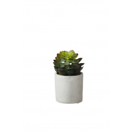 SUCCULENT - vetplant in pot - cement / polyester - DIA 11 x H 14 cm
