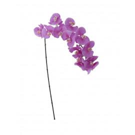 PHALAENIOPSIS - orchidée - violet - 125 cm