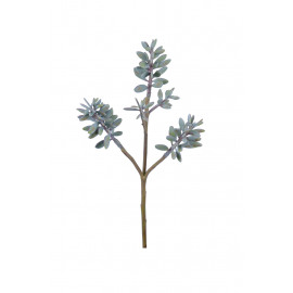 SUCCULENT - vetplant - groen - 54 cm