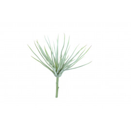 SUCCULENT - vetplant - ijs groen - 25x23 cm