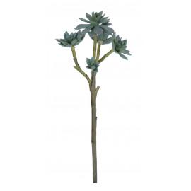 SUCCULENT - succulent -  - H 55 cm