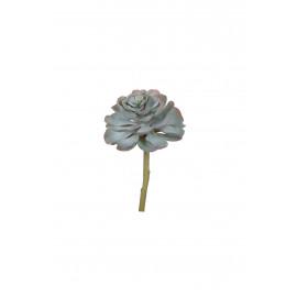 SUCCULENT - vetplant - groen - 26 cm