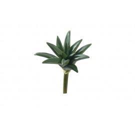 SUCCULENT - vetplant -  - DIA 25 x H 26 cm - groen