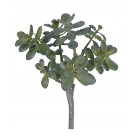 JADE - jade plant -  - H 46 cm - groen