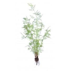 FERN - varen - groen - 215 cm