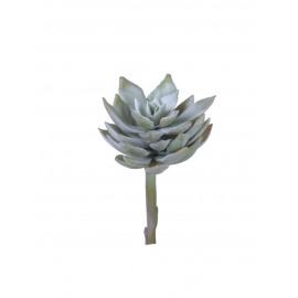 SUCCULENT - vetplant - groen - H 16 cm