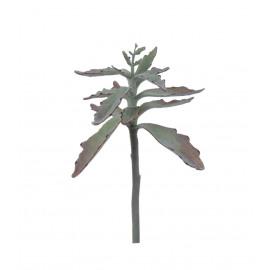 SUCCULENT - vetplant - groen - H 38 cm