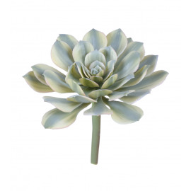 SUCCULENT - vetplant - groen - H 18 cm