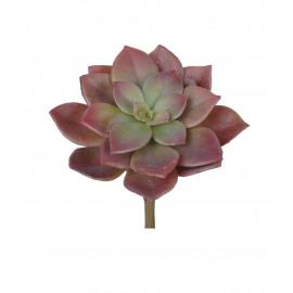 SUCCULENT - vetplant -  - H 15 cm - groen