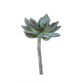 SUCCULENT - succulent -  - H 15 cm - green