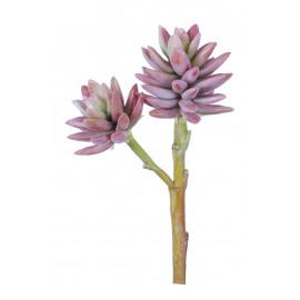 SUCCULENT - succulent -  - H 24 cm