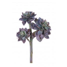 SUCCULENT - vetplant -  - H 20 cm - purper