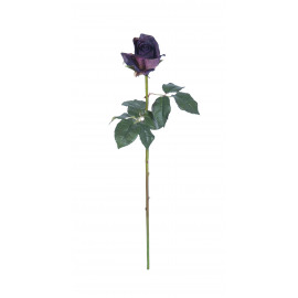 rose -  - H 75 cm - purple