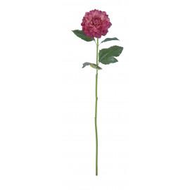 DAHLIA - dahlia - rose - H 62 cm
