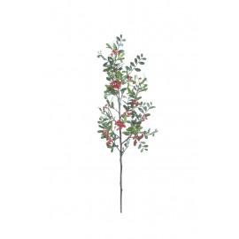 COTONEASTER - dwergmispel tak - rood - H 87 cm