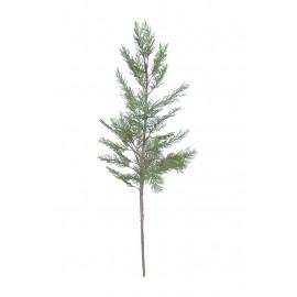 KOREAN TRUJA PINE - koreaanse truja pijnboom - groen - H 78 cm