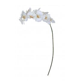 PHALAENOPSIS - orchidee - wit - H 89 cm