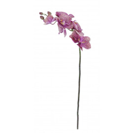 PHALAENOPSIS - orchidee - donker roze - H 67cm