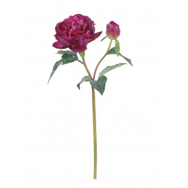 PEONY - pioen - rood - H 58 cm