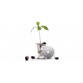 Sprout stekschaaltje S
