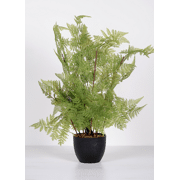 Green fern, decoratieve varen - H60