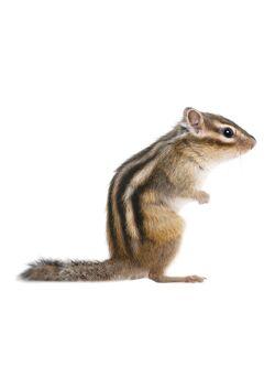 Forest Friends Squirrel