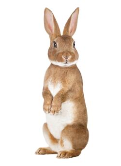Forest Friends Rabbit