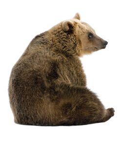 Forest Friends Bear